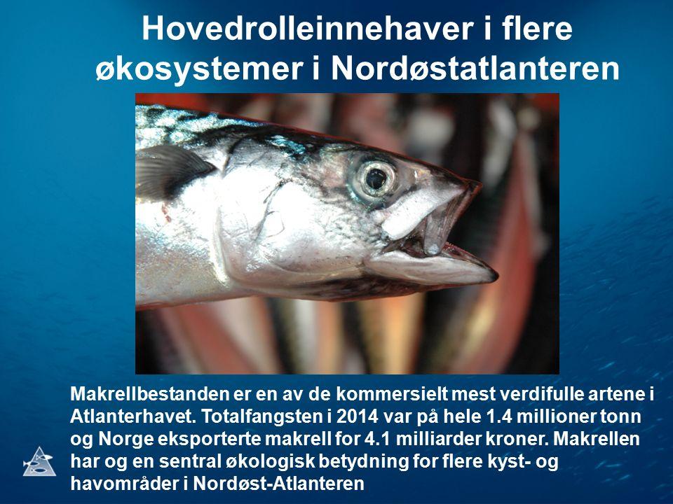Hovedrolleinnehaver i flere økosystemer i Nordøstatlanteren Makrellbestanden er en av de kommersielt mest verdifulle artene i Atlanterhavet. Totalfang