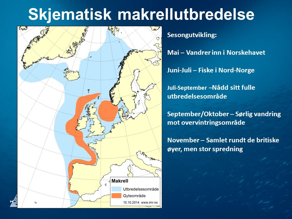 Skjematisk makrellutbredelse Sesongutvikling: Mai – Vandrer inn i Norskehavet Juni-Juli – Fiske i Nord-Norge Juli-September – Nådd sitt fulle utbredel