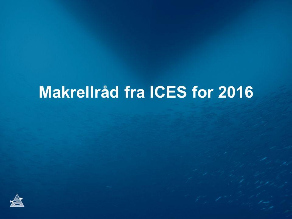 Makrellråd fra ICES for 2016