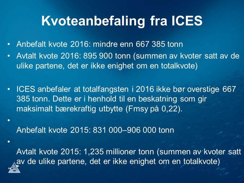 Kvoteanbefaling fra ICES Anbefalt kvote 2016: mindre enn 667 385 tonn Avtalt kvote 2016: 895 900 tonn (summen av kvoter satt av de ulike partene, det er ikke enighet om en totalkvote) ICES anbefaler at totalfangsten i 2016 ikke bør overstige 667 385 tonn.