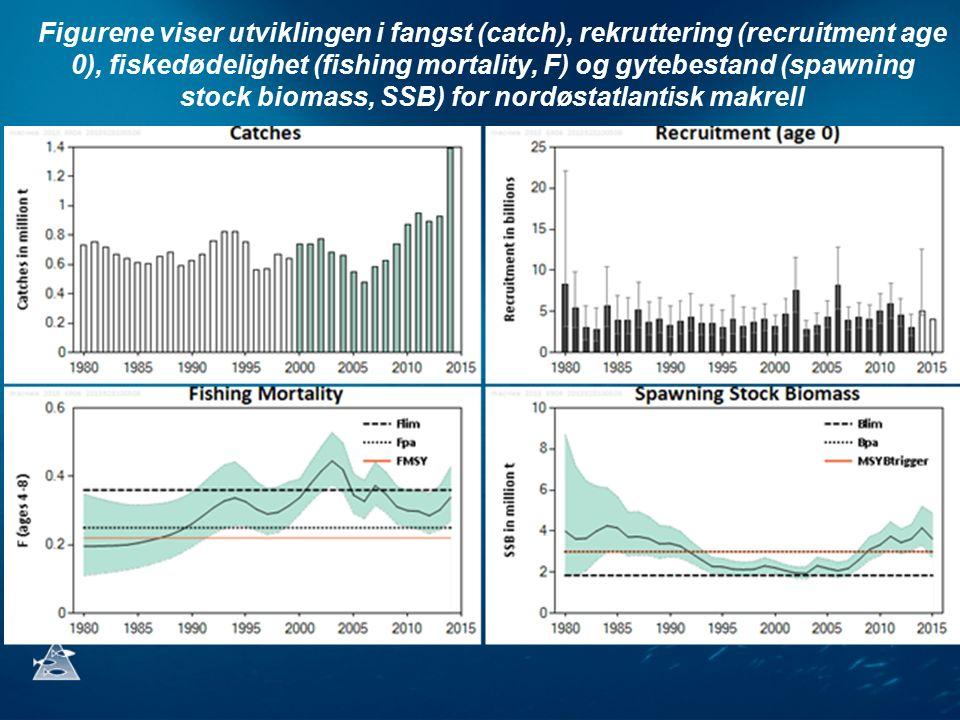 Figurene viser utviklingen i fangst (catch), rekruttering (recruitment age 0), fiskedødelighet (fishing mortality, F) og gytebestand (spawning stock biomass, SSB) for nordøstatlantisk makrell
