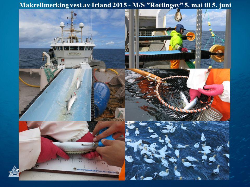 """Makrellmerking vest av Irland 2015 - M/S """"Røttingøy"""" 5. mai til 5. juni"""
