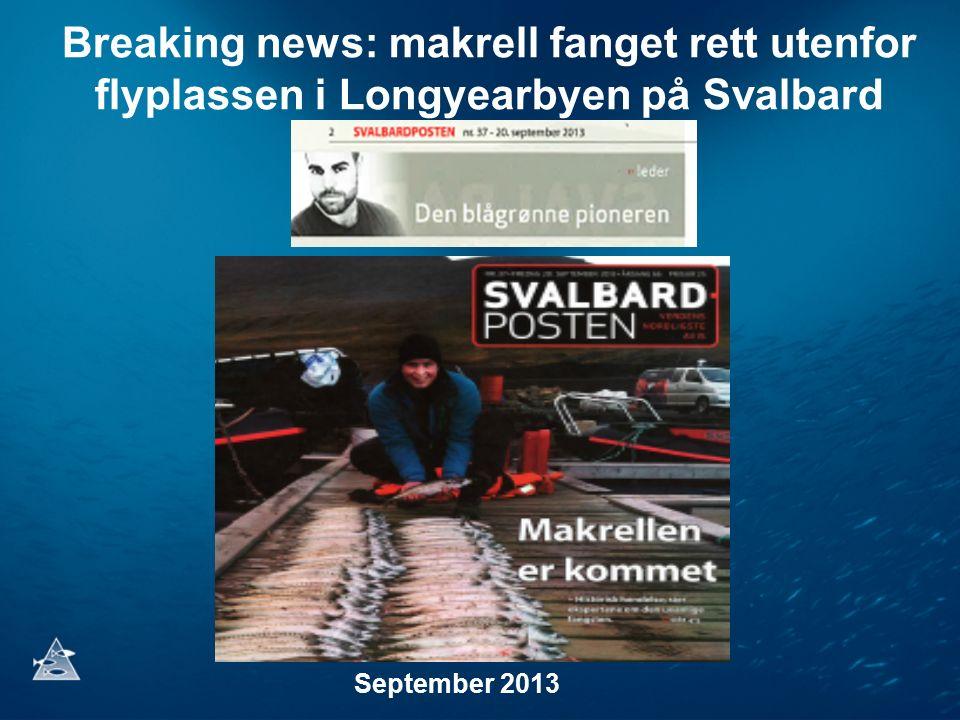 Breaking news: makrell fanget rett utenfor flyplassen i Longyearbyen på Svalbard September 2013