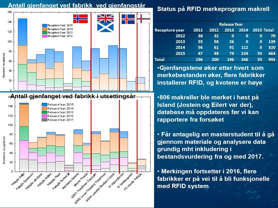 Antall gjenfanget ved fabrikk ved gjenfangstår ReleaseYear Recapture year20112012201320142015Total 2012383200070 201355582600139 20145661911120320 201547497923455464 Total19620019634655993 Gjenfangstene øker etter hvert som merkebestanden øker, flere fabrikker installerer RFID, og kvotene er høye 806 makreller ble merket i høst på Island (Jostein og Eilert var der), database må oppdateres før vi kan rapportere fra forsøket Får antagelig en masterstudent til å gå gjennom materiale og analysere data grundig mht inkludering i bestandsvurdering fra og med 2017.
