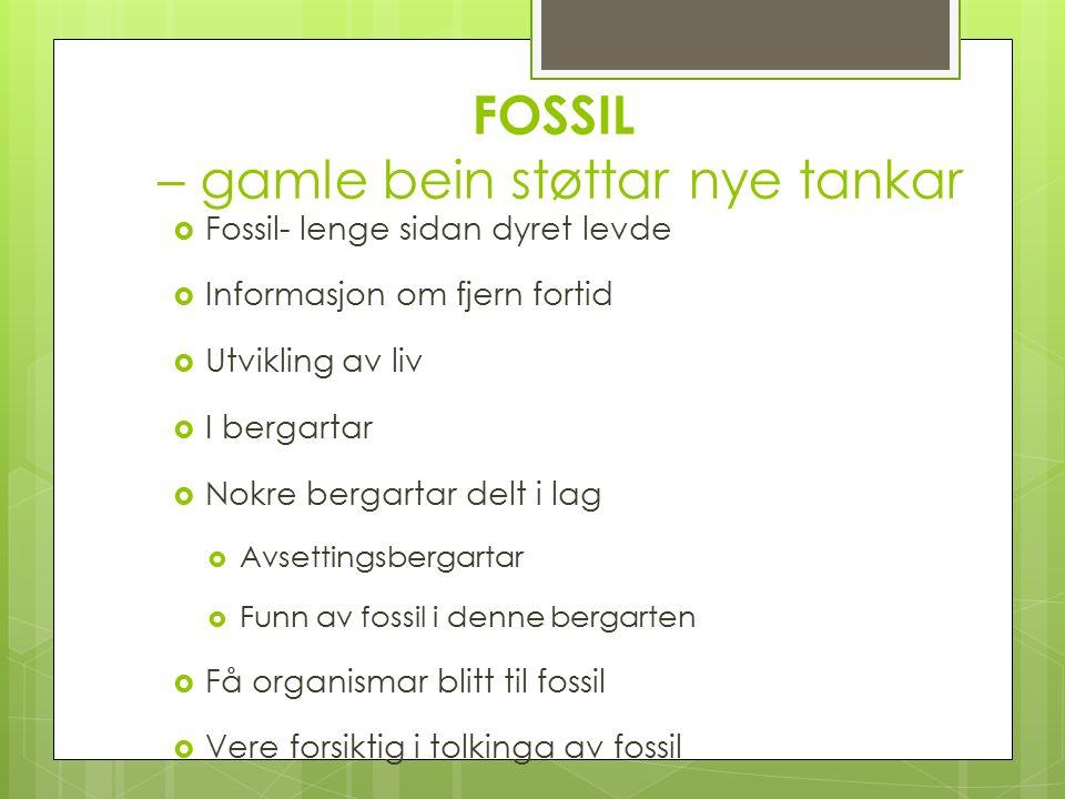 FOSSIL – gamle bein støttar nye tankar  Fossil- lenge sidan dyret levde  Informasjon om fjern fortid  Utvikling av liv  I bergartar  Nokre bergartar delt i lag  Avsettingsbergartar  Funn av fossil i denne bergarten  Få organismar blitt til fossil  Vere forsiktig i tolkinga av fossil