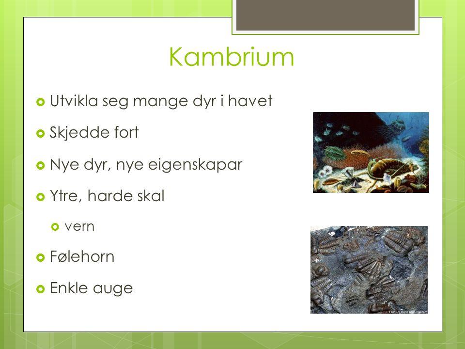 Kambrium  Utvikla seg mange dyr i havet  Skjedde fort  Nye dyr, nye eigenskapar  Ytre, harde skal  vern  Følehorn  Enkle auge