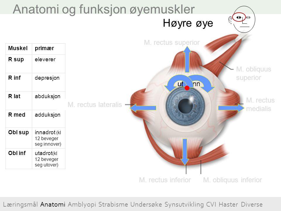 Occipital lappen Parietal- lappen Temporal- lappen Frontal-lappen Dorsal stream – Hvor? Oppfatte visuelt komplekse situasjoner Oppfatte objekter i bevegelse Initiere visuelt styrte bevegelser Cerebral visual impairment Ventral stream – Hva.