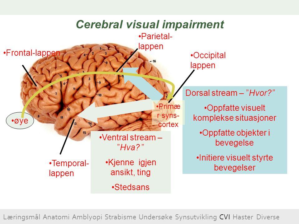 """Occipital lappen Parietal- lappen Temporal- lappen Frontal-lappen Dorsal stream – """"Hvor?"""" Oppfatte visuelt komplekse situasjoner Oppfatte objekter i b"""
