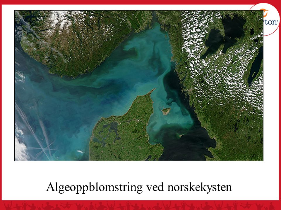 Algeoppblomstring ved norskekysten