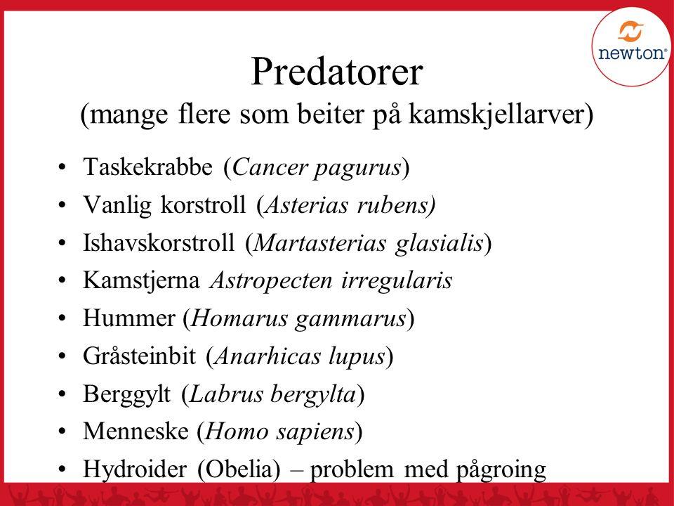 Predatorer (mange flere som beiter på kamskjellarver) Taskekrabbe (Cancer pagurus) Vanlig korstroll (Asterias rubens) Ishavskorstroll (Martasterias gl