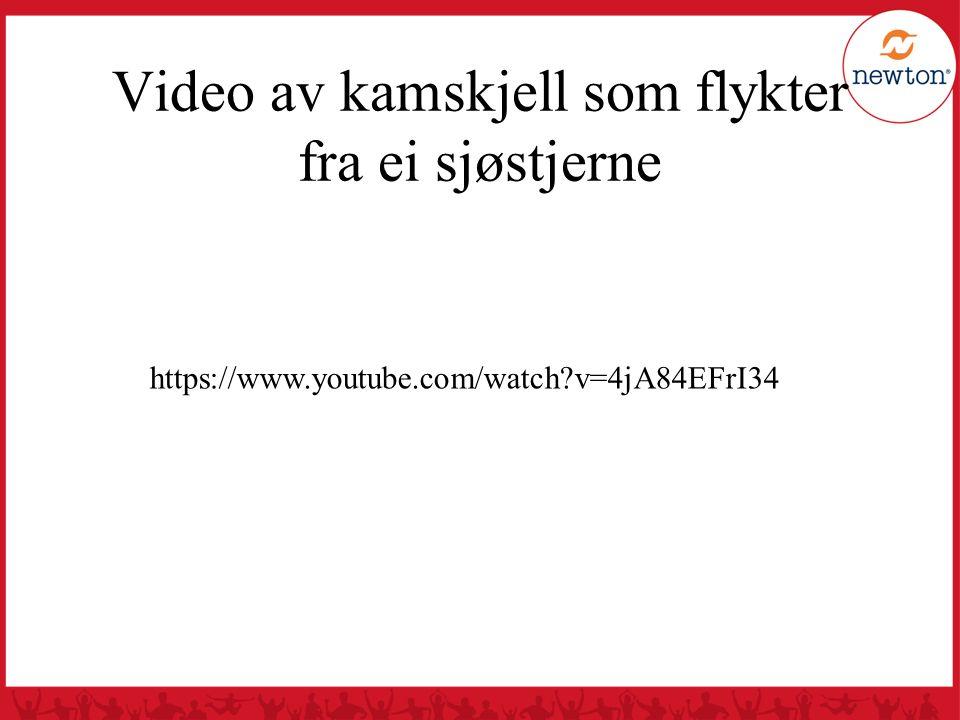 Video av kamskjell som flykter fra ei sjøstjerne https://www.youtube.com/watch?v=4jA84EFrI34