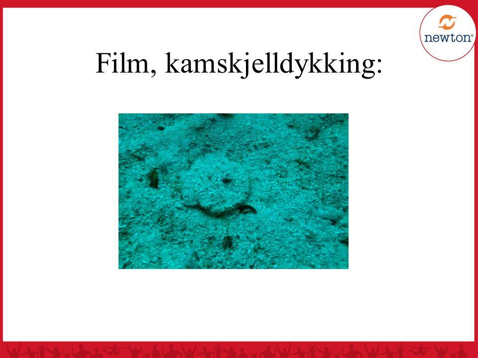Film, kamskjelldykking:
