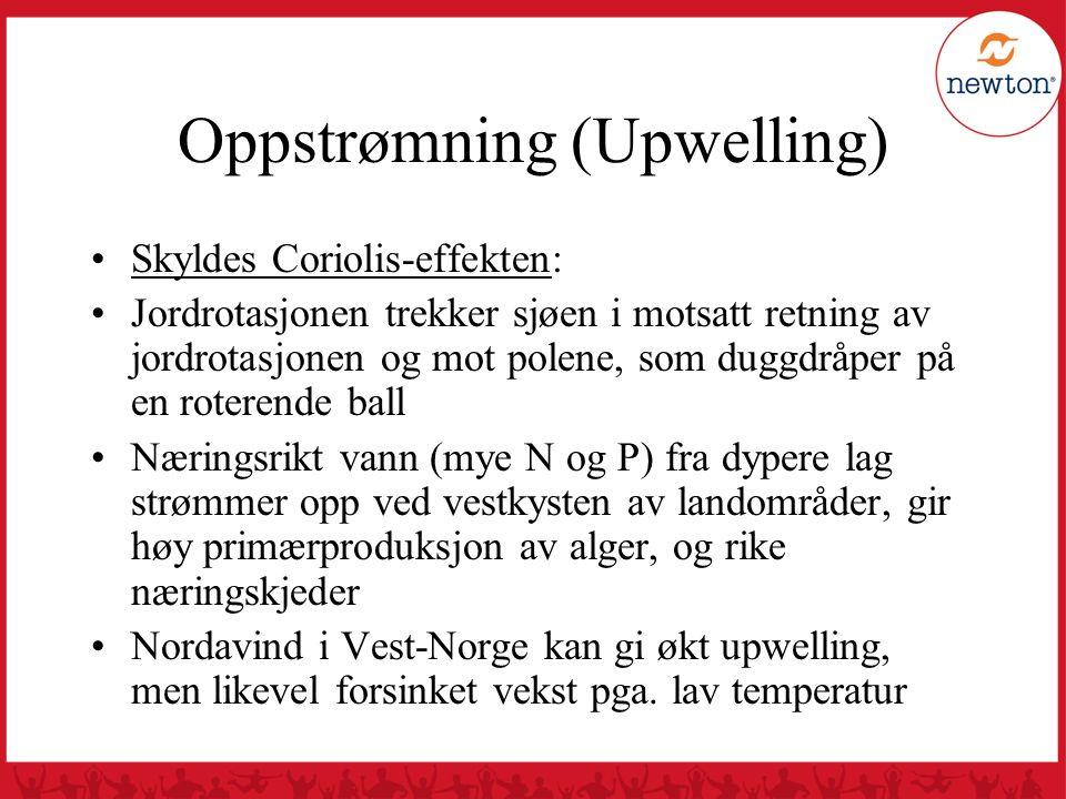 Oppstrømning (Upwelling) Skyldes Coriolis-effekten: Jordrotasjonen trekker sjøen i motsatt retning av jordrotasjonen og mot polene, som duggdråper på