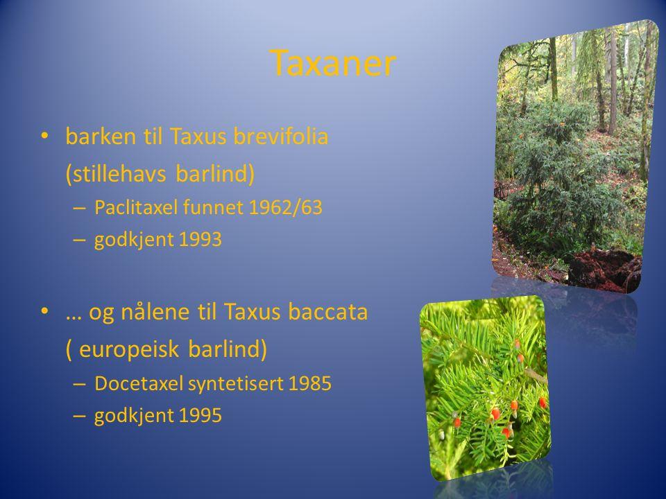 Taxaner barken til Taxus brevifolia (stillehavs barlind) – Paclitaxel funnet 1962/63 – godkjent 1993 … og nålene til Taxus baccata ( europeisk barlind) – Docetaxel syntetisert 1985 – godkjent 1995