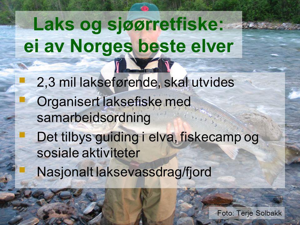  2,3 mil lakseførende, skal utvides  Organisert laksefiske med samarbeidsordning  Det tilbys guiding i elva, fiskecamp og sosiale aktiviteter  Nas