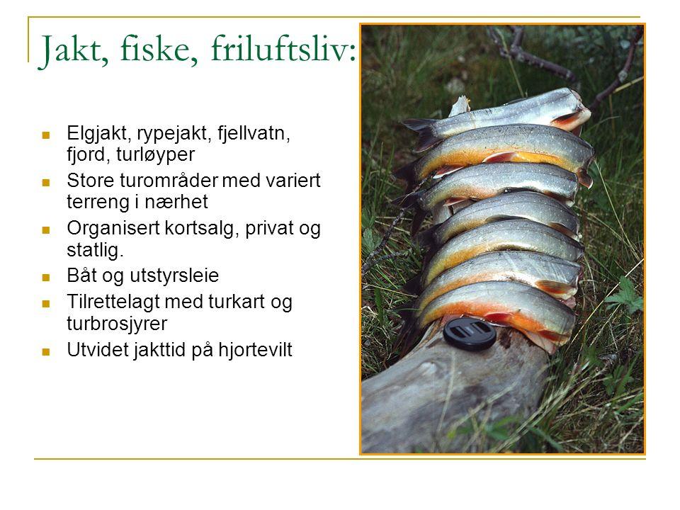 Jakt, fiske, friluftsliv: Elgjakt, rypejakt, fjellvatn, fjord, turløyper Store turområder med variert terreng i nærhet Organisert kortsalg, privat og statlig.