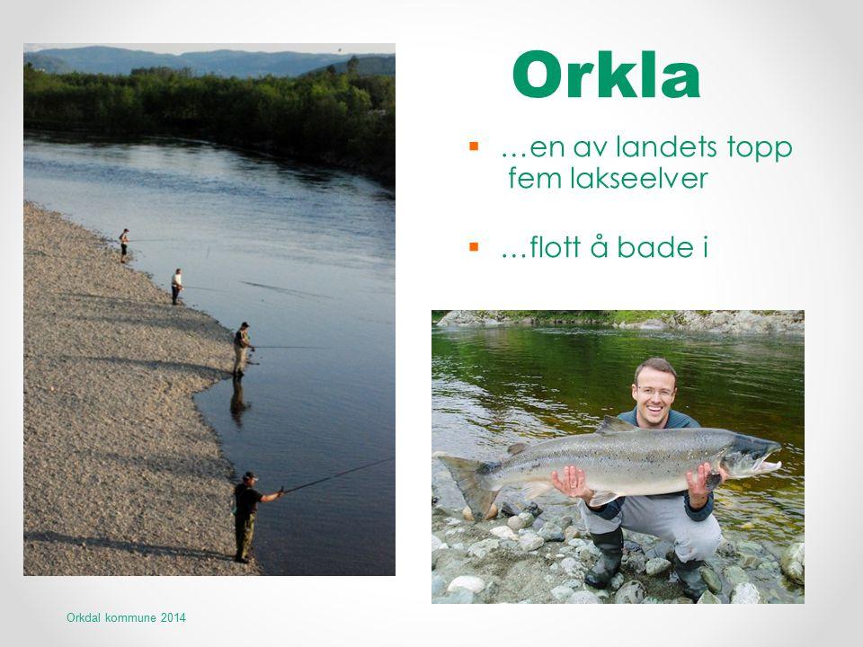 Orkla  …en av landets topp fem lakseelver  …flott å bade i Orkdal kommune 2014