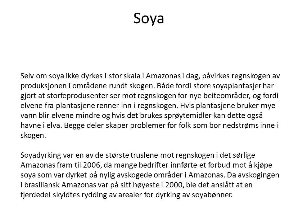 Soya Selv om soya ikke dyrkes i stor skala i Amazonas i dag, påvirkes regnskogen av produksjonen i områdene rundt skogen. Både fordi store soyaplantas