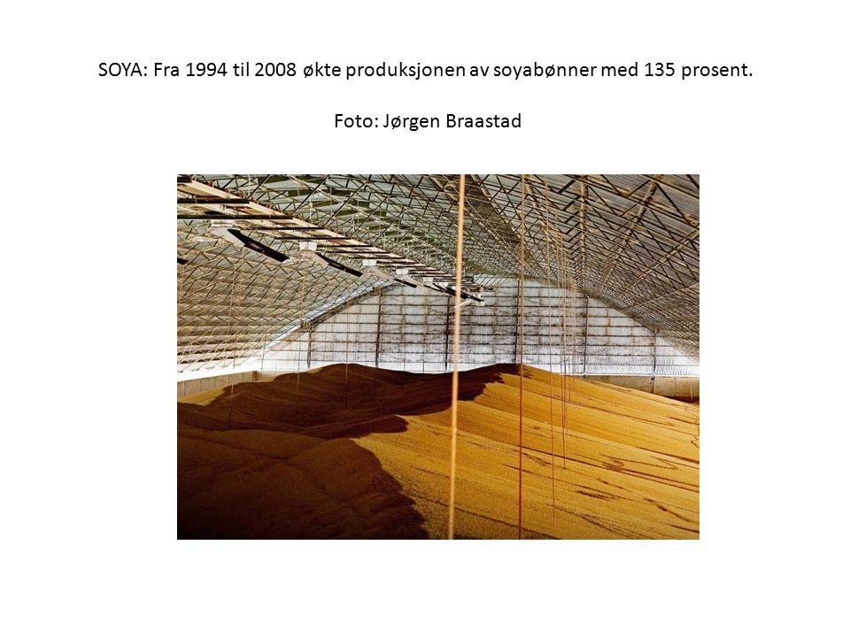 SOYA: Fra 1994 til 2008 økte produksjonen av soyabønner med 135 prosent. Foto: Jørgen Braastad