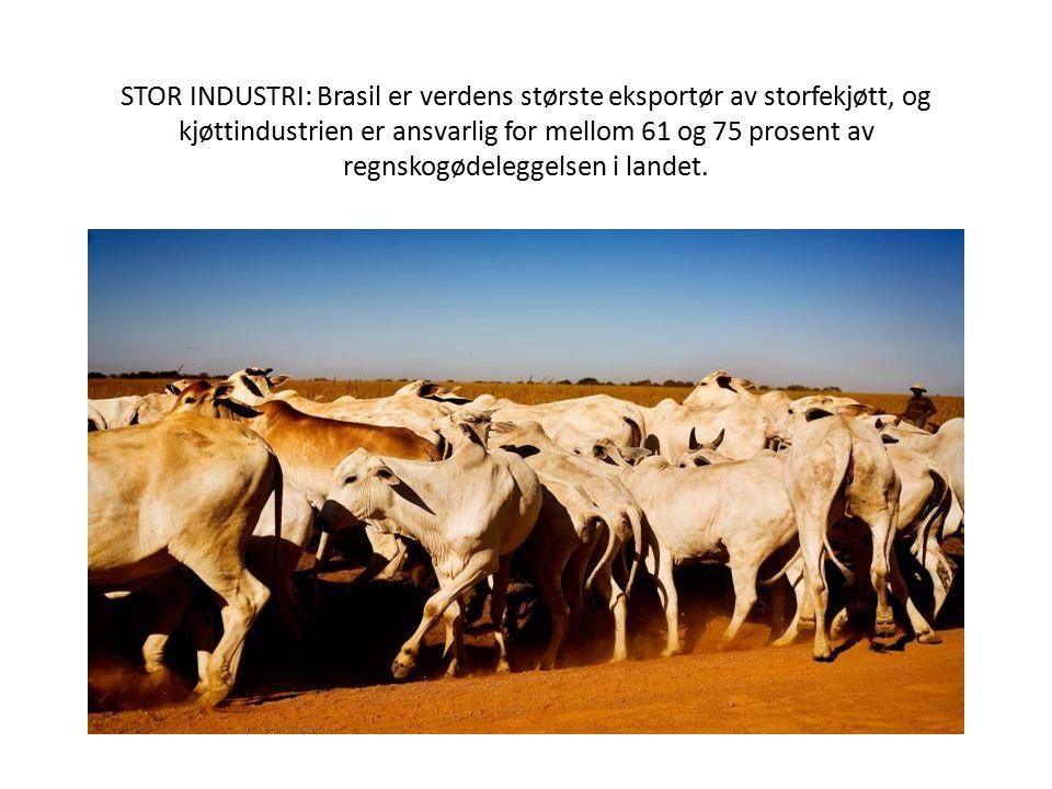 STOR INDUSTRI: Brasil er verdens største eksportør av storfekjøtt, og kjøttindustrien er ansvarlig for mellom 61 og 75 prosent av regnskogødeleggelsen i landet.