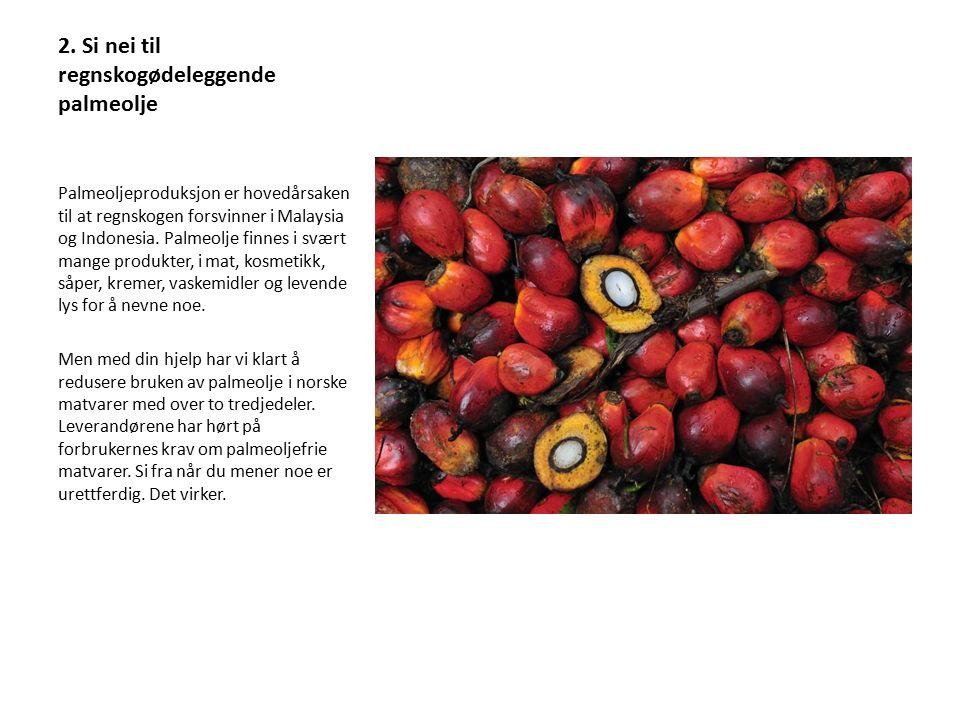 2. Si nei til regnskogødeleggende palmeolje Palmeoljeproduksjon er hovedårsaken til at regnskogen forsvinner i Malaysia og Indonesia. Palmeolje finnes