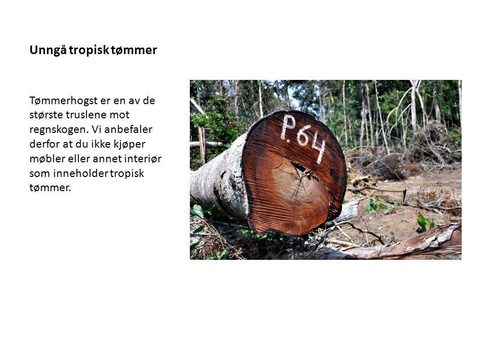 Unngå tropisk tømmer Tømmerhogst er en av de største truslene mot regnskogen. Vi anbefaler derfor at du ikke kjøper møbler eller annet interiør som in