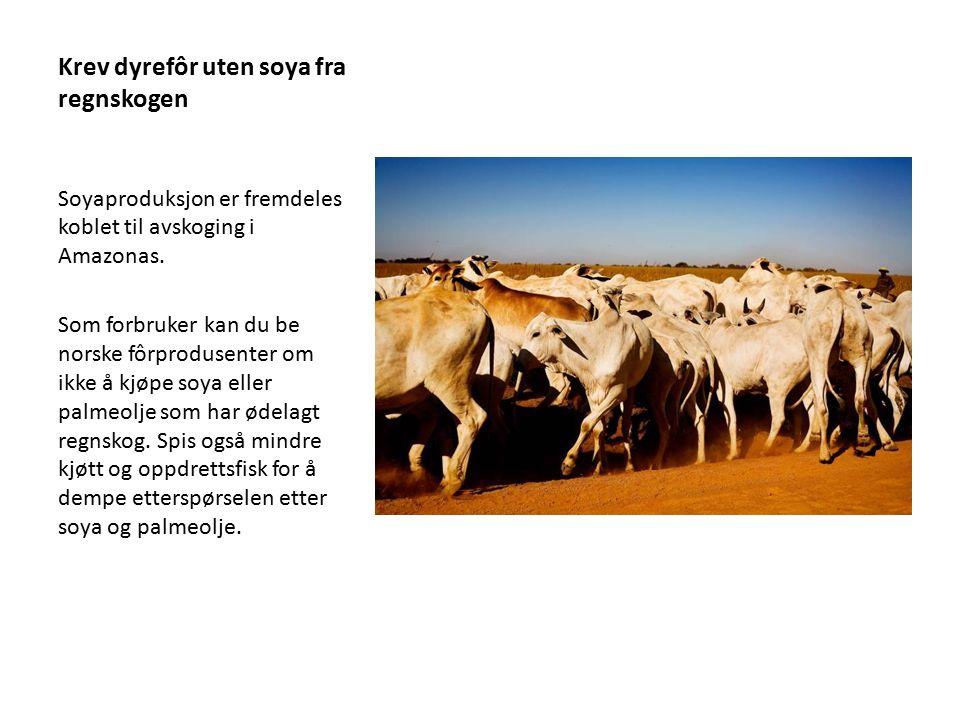 Krev dyrefôr uten soya fra regnskogen Soyaproduksjon er fremdeles koblet til avskoging i Amazonas. Som forbruker kan du be norske fôrprodusenter om ik