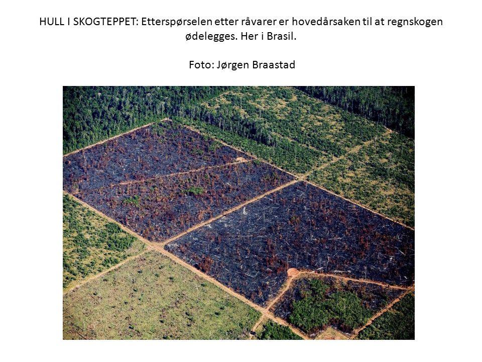 HULL I SKOGTEPPET: Etterspørselen etter råvarer er hovedårsaken til at regnskogen ødelegges. Her i Brasil. Foto: Jørgen Braastad
