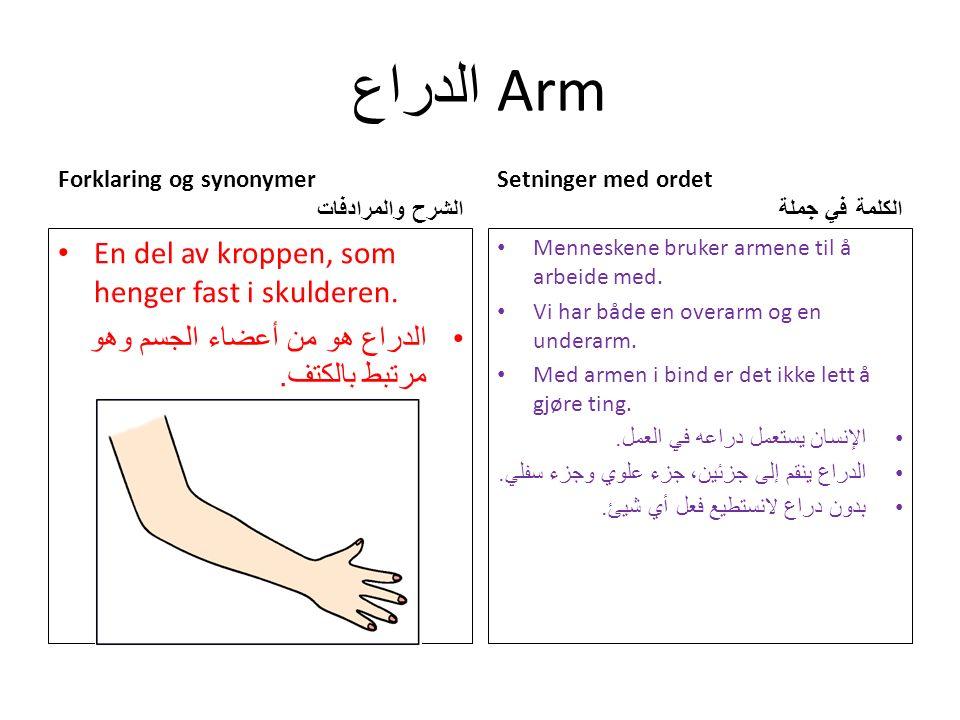 الدراع Arm Forklaring og synonymer الشرح والمرادفات En del av kroppen, som henger fast i skulderen.