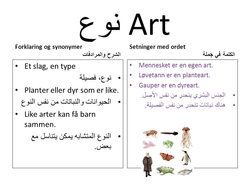 نوع Art Forklaring og synonymer الشرح والمرادفات Et slag, en type نوع، فصيلة Planter eller dyr som er like.