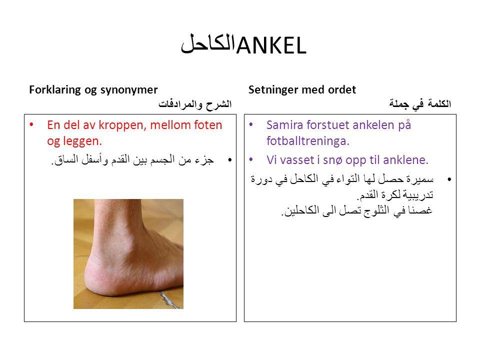 الكاحل ANKEL Forklaring og synonymer الشرح والمرادفات En del av kroppen, mellom foten og leggen.