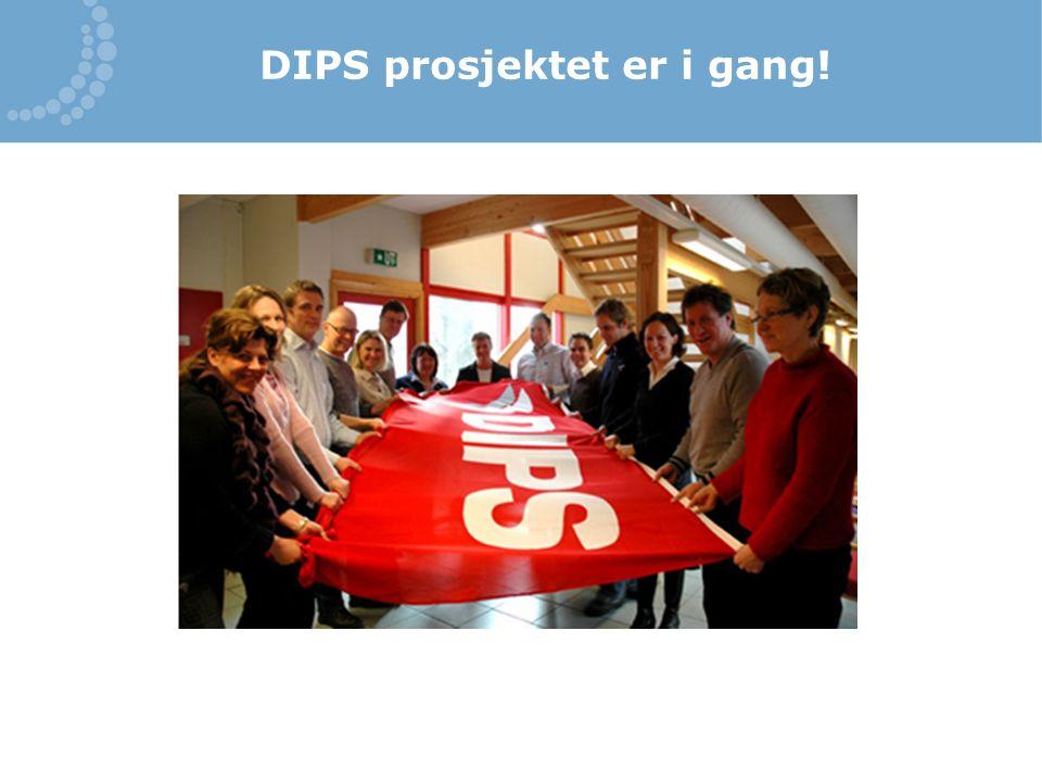DIPS prosjektet er i gang!