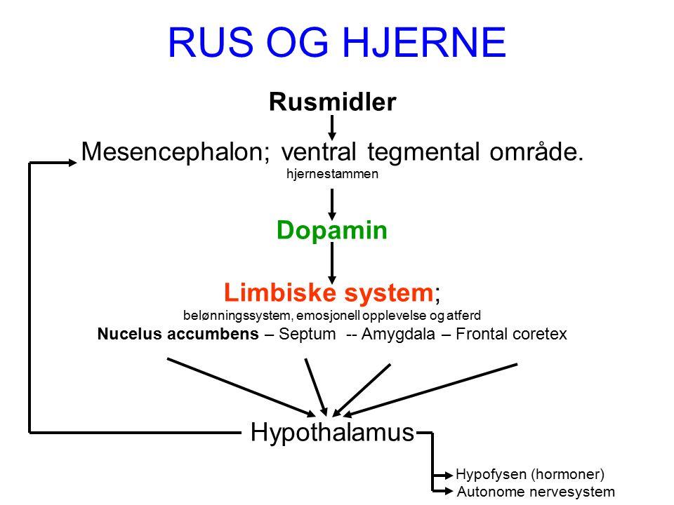 RUS OG HJERNE Rusmidler Mesencephalon; ventral tegmental område.