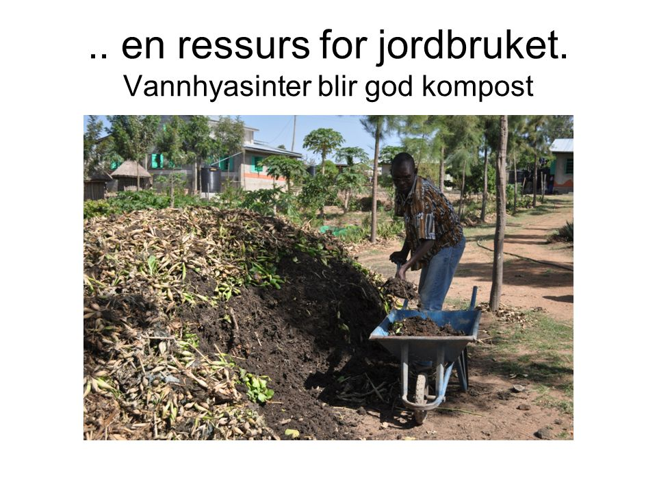 .. en ressurs for jordbruket. Vannhyasinter blir god kompost