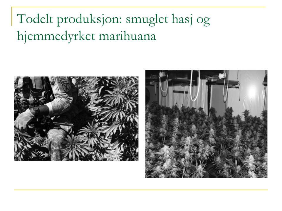 Todelt produksjon: smuglet hasj og hjemmedyrket marihuana