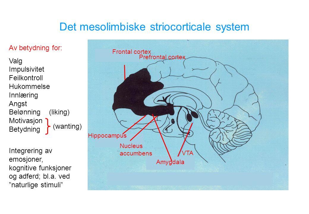 Amygdala Nucleus accumbens Hippocampus Frontal cortex Prefrontal cortex Av betydning for: Valg Impulsivitet Feilkontroll Hukommelse Innlæring Angst Belønning (liking) Motivasjon Betydning Integrering av emosjoner, kognitive funksjoner og adferd; bl.a.