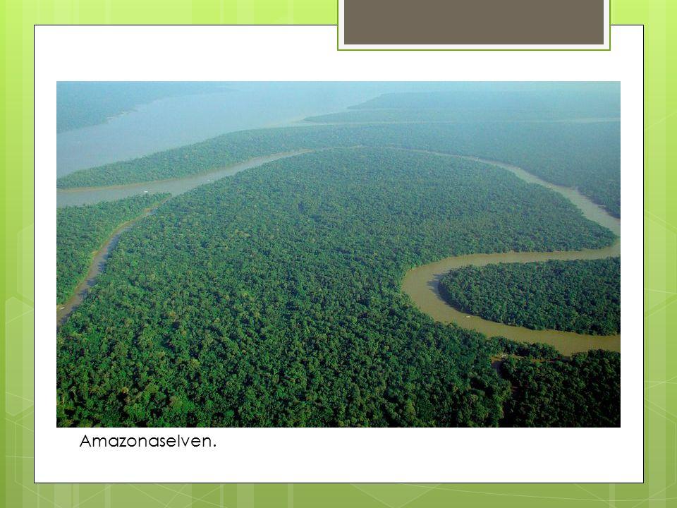 Amazonaselven.
