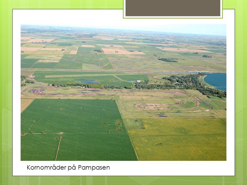 Kornområder på Pampasen
