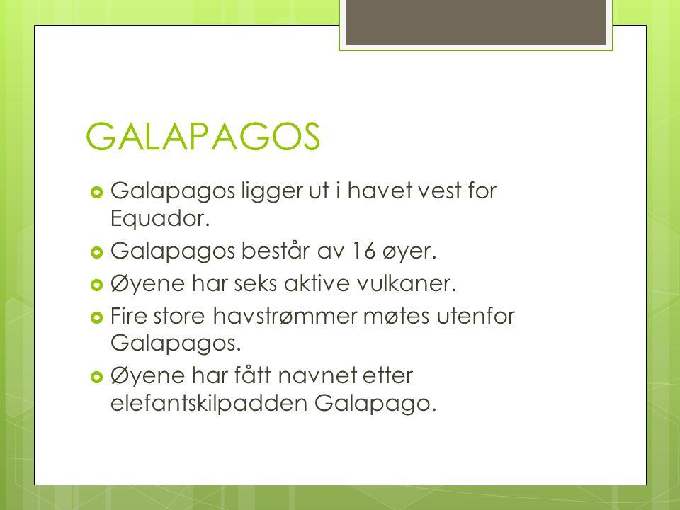 GALAPAGOS  Galapagos ligger ut i havet vest for Equador.