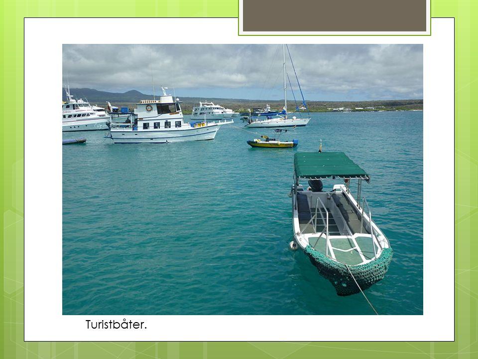 Turistbåter.