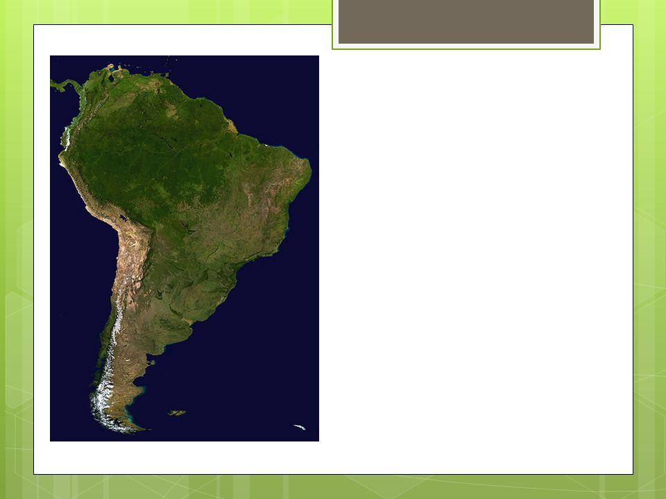 Regnskogen i Amazonas