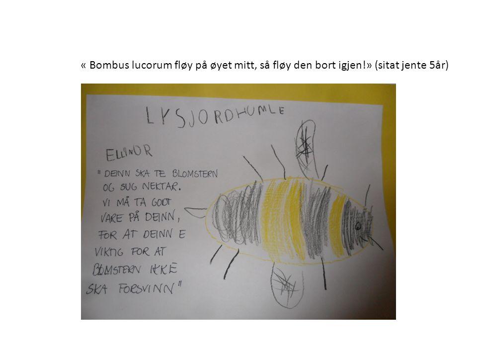 « Bombus lucorum fløy på øyet mitt, så fløy den bort igjen!» (sitat jente 5år)