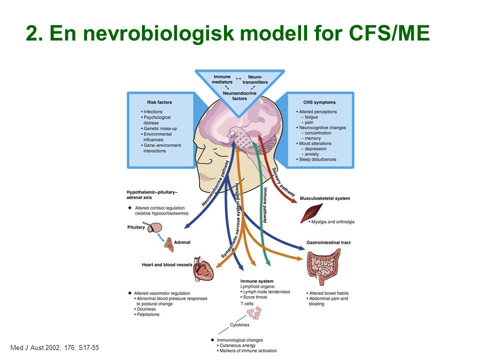 Med J Aust 2002; 176: S17-55 2. En nevrobiologisk modell for CFS/ME