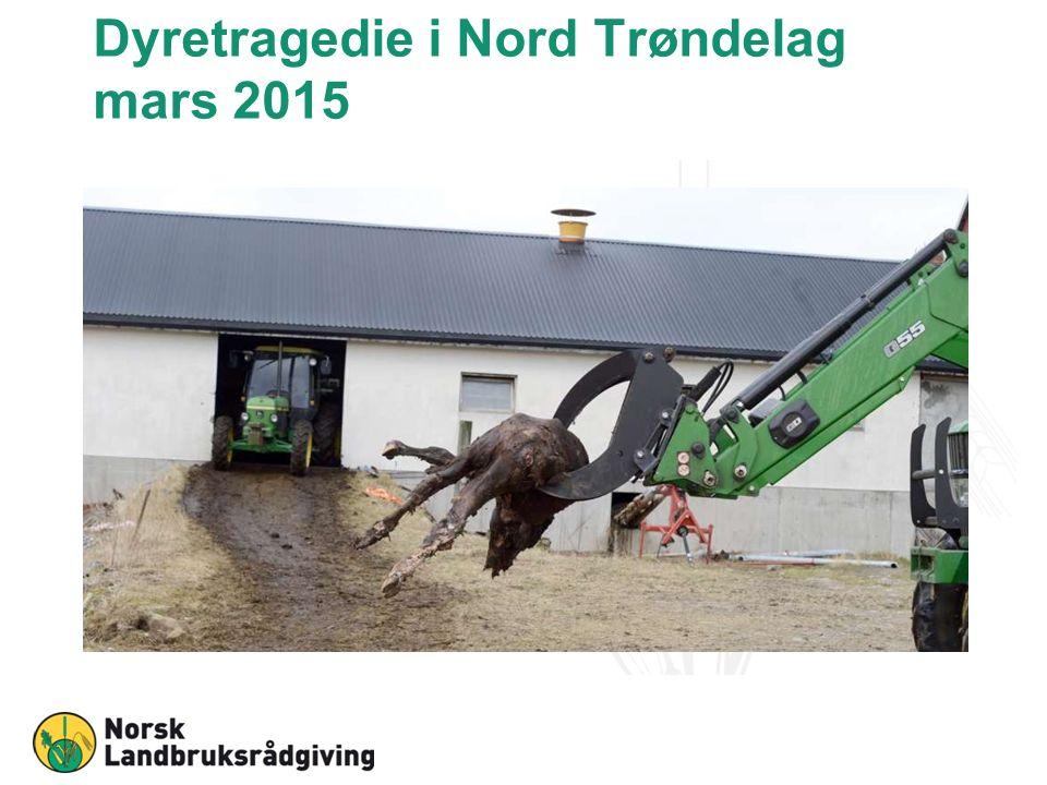 Dyretragedie i Nord Trøndelag mars 2015