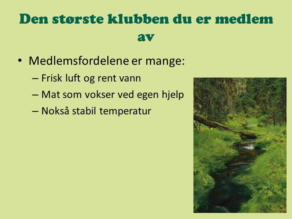 Energiforbruket etter sektor Over halvparten av all energi i Norge brukes av industrien.
