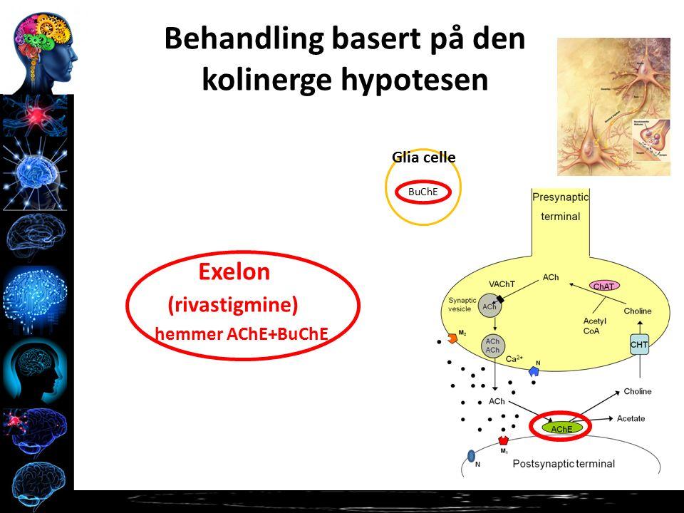 N Behandling basert på den kolinerge hypotesen Exelon (rivastigmine) hemmer AChE+BuChE BuChE Glia celle