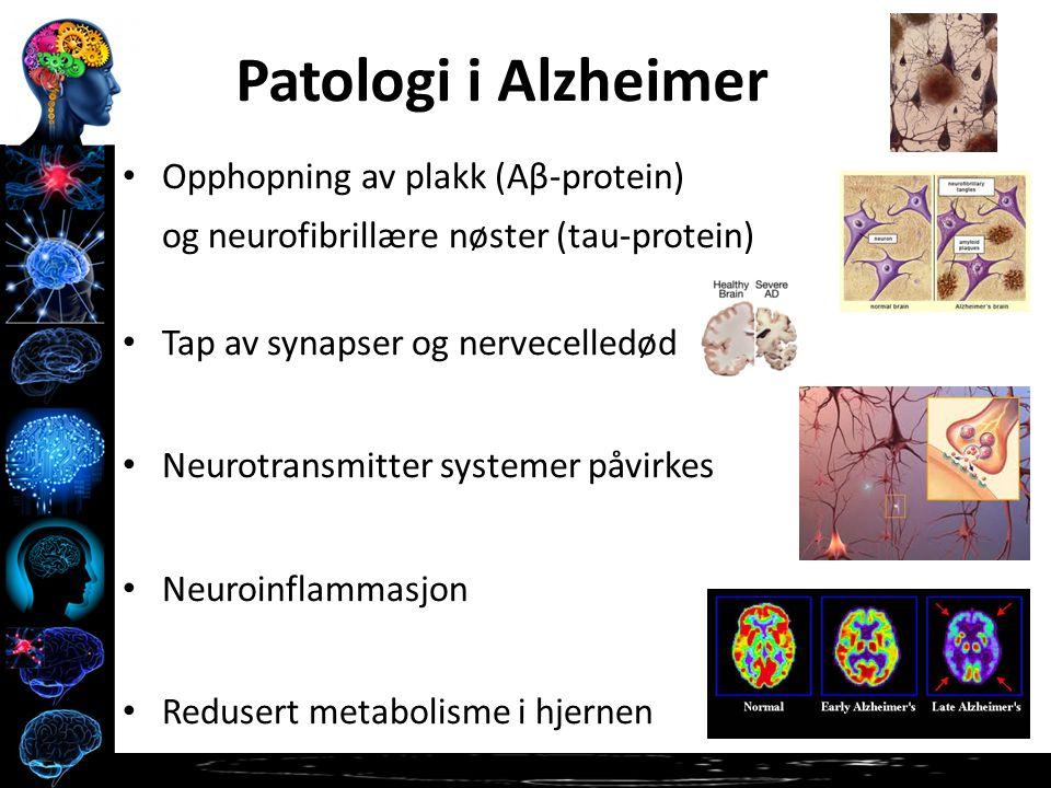 Opphopning av plakk (Aβ-protein) og neurofibrillære nøster (tau-protein) Tap av synapser og nervecelledød Neurotransmitter systemer påvirkes Neuroinflammasjon Redusert metabolisme i hjernen Patologi i Alzheimer