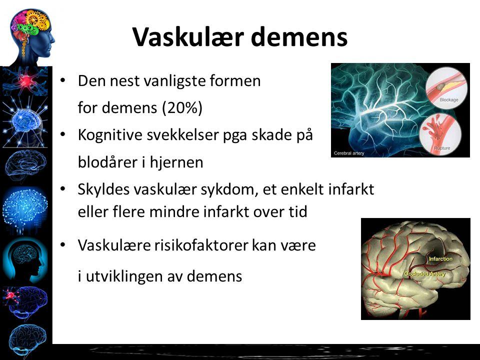 Vaskulær demens Den nest vanligste formen for demens (20%) Kognitive svekkelser pga skade på blodårer i hjernen Skyldes vaskulær sykdom, et enkelt infarkt eller flere mindre infarkt over tid Vaskulære risikofaktorer kan være involvert i utviklingen av demens