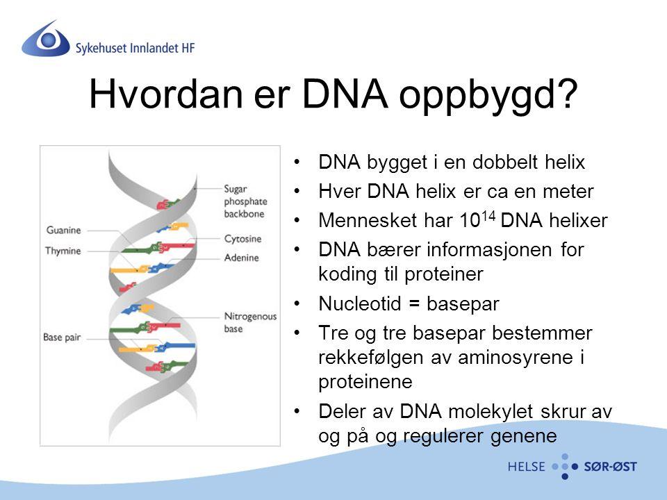 Hvordan er DNA oppbygd.