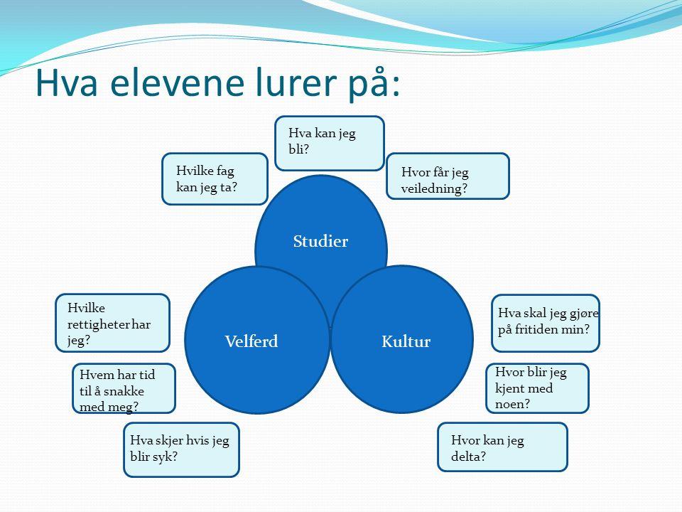 Studier VelferdKultur Hva elevene lurer på: Hvilke fag kan jeg ta? Hva kan jeg bli? Hvor får jeg veiledning? Hvor blir jeg kjent med noen? Hvem har ti